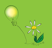 Fleur avec l'ampoule images libres de droits