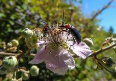 Fleur avec l'insecte image stock