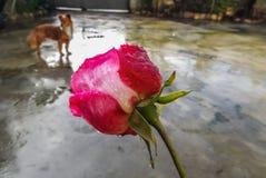Fleur avec l'insecte images stock