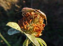 Fleur avec l'insecte photos stock