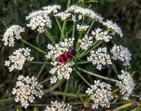 Fleur avec l'insecte photographie stock