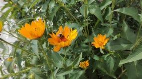 Fleur avec l'insecte pollinisateur photo stock