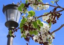Fleur avec la lanterne Photos stock