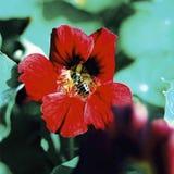 Fleur avec la mouche de vol plané Photo stock