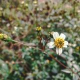 Fleur avec la nature de feuilles Images stock