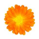 Fleur avec le chemin de découpage Images stock