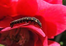 Fleur avec le petit insecte images libres de droits