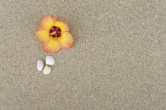 Fleur avec le sable Photographie stock libre de droits