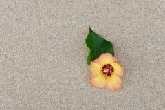 Fleur avec le sable Image libre de droits