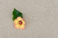 Fleur avec le sable Photo stock