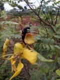 Fleur avec le scarabée photos stock