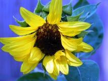 Fleur avec les feuilles jaunes Photos stock