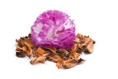 Fleur avec Potpurri Photos libres de droits