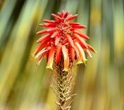 Fleur avec un palmier à l'arrière-plan image libre de droits