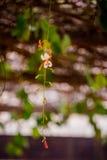 Fleur belle Photo libre de droits