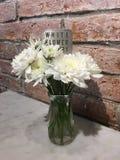 Fleur blanche Image stock