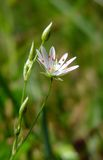 Fleur blanche Photo libre de droits
