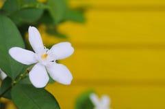 Fleur blanche avec le blackground brouillé Photographie stock