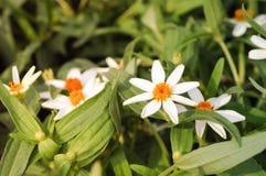 Fleur blanche d'herbe Photos libres de droits
