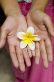 Fleur blanche dans des mains Photo stock