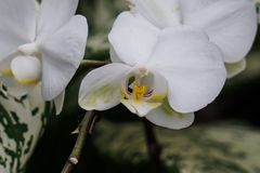 Fleur blanche dans la forêt tropicale photos stock