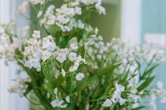 Fleur blanche dans la lumière de jour jpg Photographie stock libre de droits