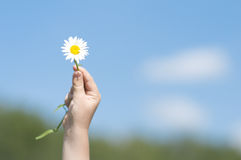 Fleur blanche dans la main de l'enfant Photo stock