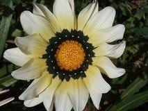 Fleur blanche dans la nature photo libre de droits