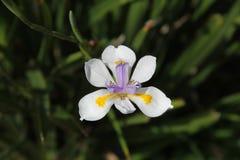 Fleur blanche dans le buisson Photo libre de droits