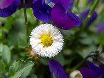 Fleur blanche dans le jardin photo stock