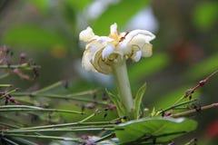 Fleur blanche dans leur nid Photo stock