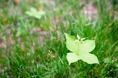 Fleur blanche dans une herbe verte juteuse Image stock