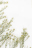 Fleur blanche de coupeur dedans images stock