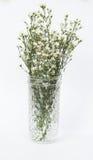Fleur blanche de coupeur en verre d'isolement photo stock