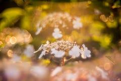 Fleur blanche de floraison Images stock