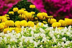 Fleur blanche de jardin de désambiguisation de pensée photo libre de droits