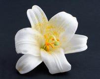 Fleur blanche de macro projectile photographie stock