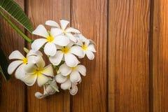 Fleur blanche de plumeria sur le fond en bois Images libres de droits