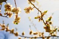 Fleur blanche de source Photo stock