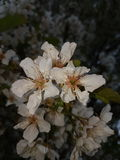 Fleur blanche en ma ville natale Photo stock