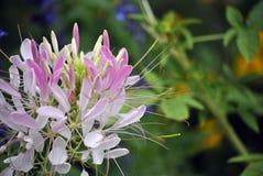 Fleur blanche en ville Photos libres de droits