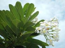 Fleur blanche et ciel photographie stock