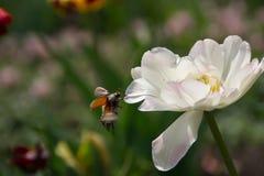 Fleur blanche et insecte Photo libre de droits