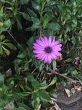 Fleur blanche et pourprée Photo stock