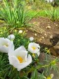 Fleur blanche et un insecte minuscule Photographie stock libre de droits
