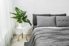 Fleur blanche grise de décor intérieur de chambre à coucher image libre de droits