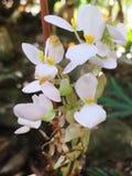 Fleur blanche images libres de droits
