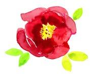Fleur blanche luxueuse de pivoine peinte dans des couleurs rouges Peinture photographie stock