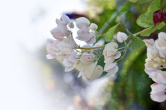 Fleur blanche naturelle avec le fond brouillé Image libre de droits