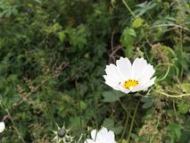 Fleur blanche, plan rapproché Première nature d'automne, forêt Photos stock